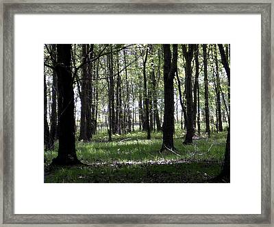 Framed Print featuring the photograph Tree In The Woods by Michelle Audas