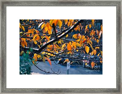 Tree In View Framed Print by Simonne Mina