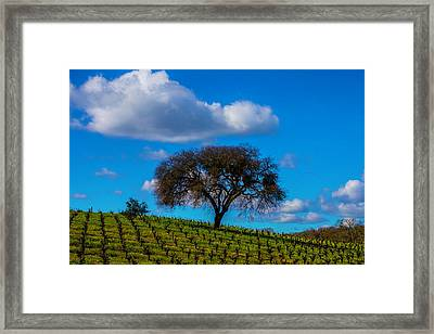 Tree In Vineyard With Clouds Framed Print by Garry Gay