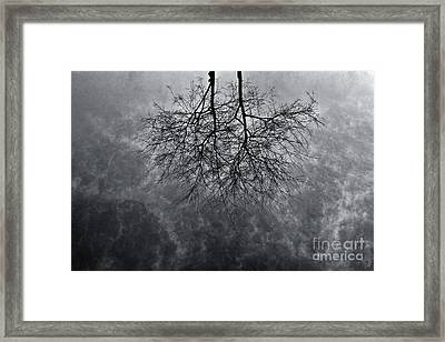 Tree In Water Framed Print