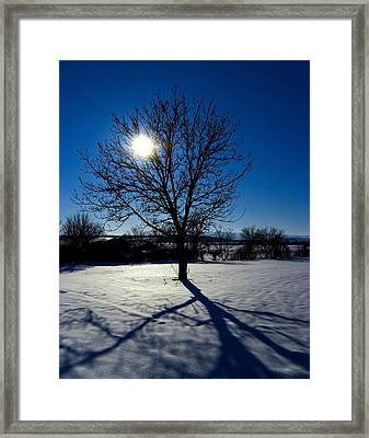 Tree Into Sun On A Winter Snowy Afternoon Framed Print