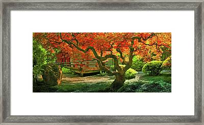 Tree, Japanese Garden Framed Print