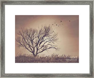 Tree Framed Print by Juli Scalzi