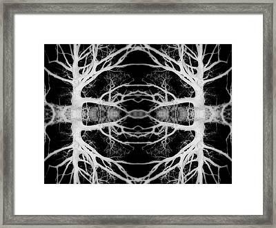 Tree Kaleidescope  Framed Print