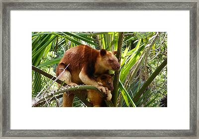 Tree Kangaroo 1 Framed Print