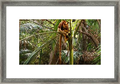 Tree Kangaroo 2 Framed Print