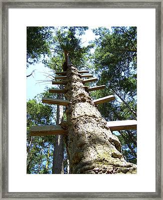 Tree Ladder Framed Print by Gene Ritchhart