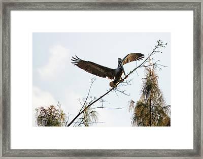 Tree Landing Framed Print