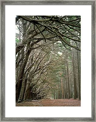 Tree Lane Framed Print