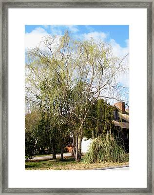 Tree Framed Print by Lanjee Chee