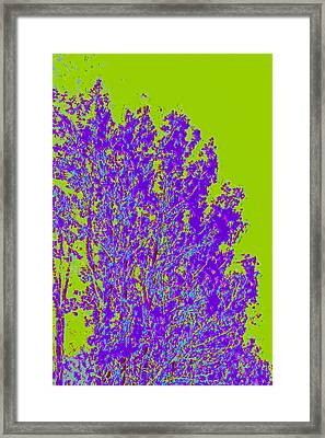 Tree Leaves D4 Framed Print by Modified Image