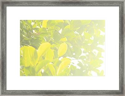Tree Leaf Framed Print