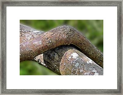 Tree Legs Framed Print