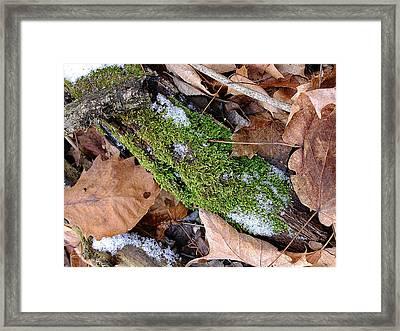 Tree Lichen Framed Print by Scott Kingery