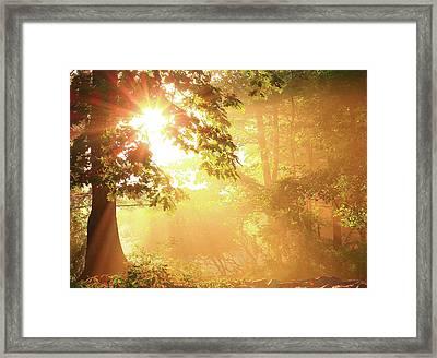 Tree Light-god's Rays Framed Print