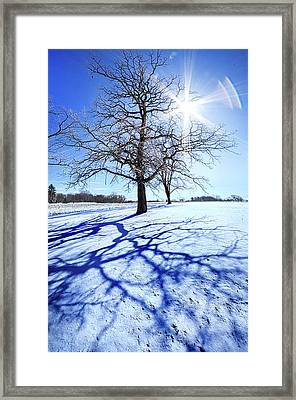Framed Print featuring the photograph Tree Light by Phil Koch