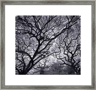 Tree Lightening Framed Print by Sean Davey