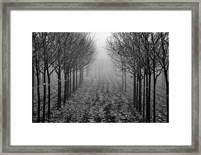 Tree Line Framed Print by David  Hubbs