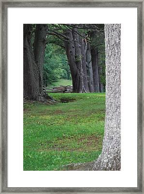 Tree Line Framed Print by Eric Liller