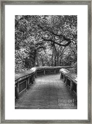 Tree Line Memories Framed Print by Julie Clements