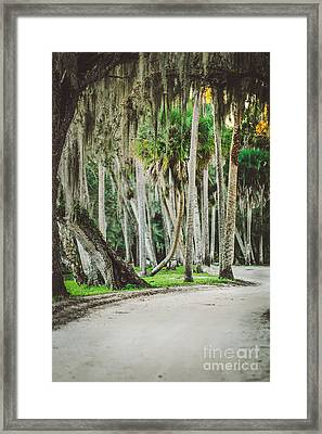 Tree Lined Dirt Road In Vintage Framed Print by Liesl Marelli