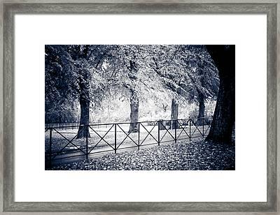 Tree Lined Framed Print by Maggie Terlecki