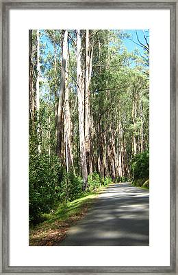 Tree Lined Mountain Road Framed Print
