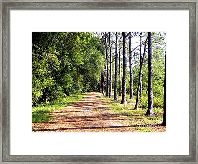 Tree Lined Path Framed Print