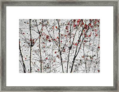 Tree Lines - A44 Framed Print