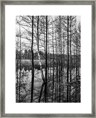 Tree Lines Framed Print by Dmytro Korol