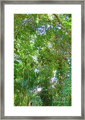 Framed Print featuring the photograph Tree M2 by Francesca Mackenney