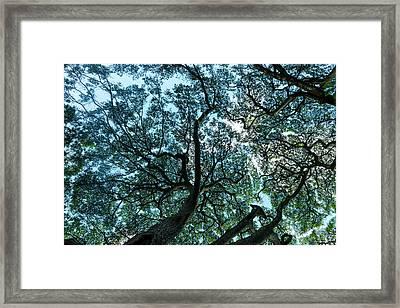 Tree Map Framed Print by Sean Davey