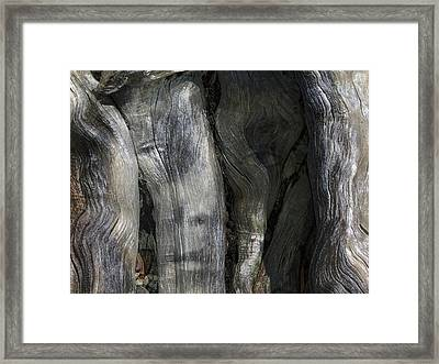 Framed Print featuring the photograph Tree Memories # 20 by Ed Hall