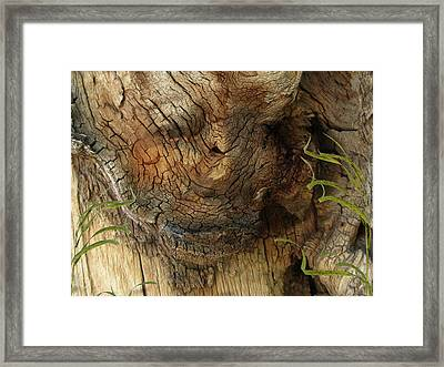 Framed Print featuring the photograph Tree Memories # 22 by Ed Hall