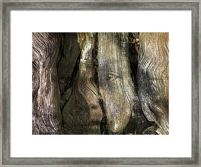 Framed Print featuring the photograph Tree Memories # 24 by Ed Hall