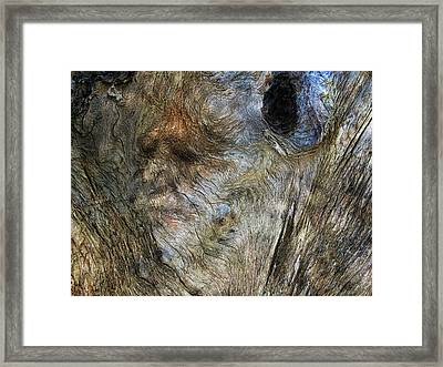 Framed Print featuring the photograph Tree Memories # 25 by Ed Hall