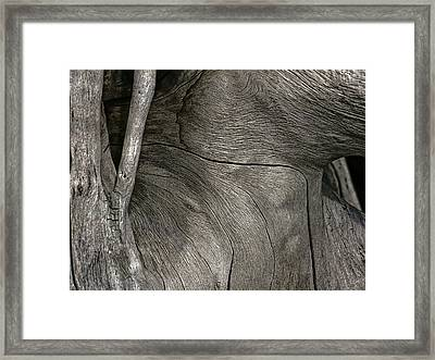 Framed Print featuring the photograph Tree Memories # 26 by Ed Hall
