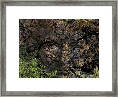 Framed Print featuring the photograph Tree Memories # 27 by Ed Hall