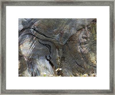Framed Print featuring the photograph Tree Memories # 28 by Ed Hall