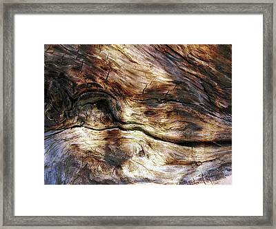 Framed Print featuring the photograph Tree Memories # 30 by Ed Hall