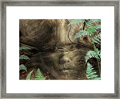 Framed Print featuring the photograph Tree Memories # 32 by Ed Hall
