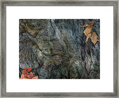 Framed Print featuring the photograph Tree Memories # 33 by Ed Hall