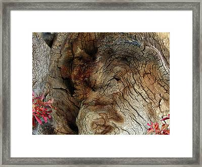 Framed Print featuring the photograph Tree Memories # 34 by Ed Hall