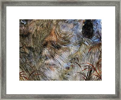 Framed Print featuring the photograph Tree Memories # 35 by Ed Hall