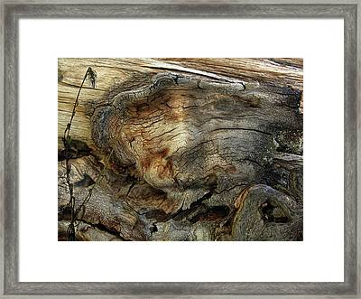 Framed Print featuring the photograph Tree Memories # 36 by Ed Hall