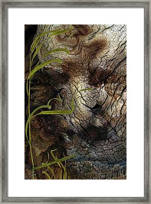 Framed Print featuring the photograph Tree Memories # 37 by Ed Hall