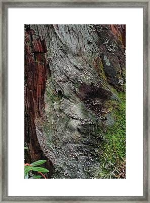 Framed Print featuring the photograph Tree Memories # 38 by Ed Hall