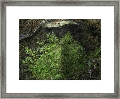 Tree Memories # 4 Framed Print by Ed Hall