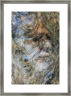 Framed Print featuring the photograph Tree Memories # 40 by Ed Hall