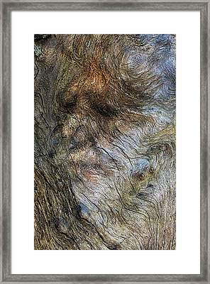 Framed Print featuring the photograph Tree Memories # 41 by Ed Hall